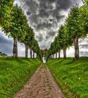 Tree view Street-WP04